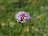 a_caccia_di_orchidee_30-6-2013-44