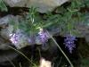 a_caccia_di_orchidee_30-6-2013-45