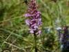 a_caccia_di_orchidee_30-6-2013-5