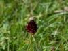 a_caccia_di_orchidee_30-6-2013-6