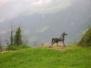 Escursione Culturale a Merano 1_2-5-2010